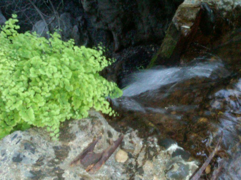 Camp josepho rustic canyon1-juliewrightlandcompany