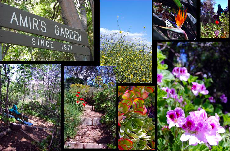 amirs garden hike griffith park los angeles the bienstock group - Amirs Garden